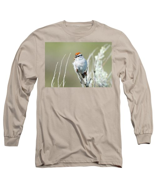 Long Sleeve T-Shirt featuring the photograph Chipping Sparrow by Mike Dawson