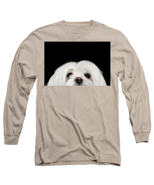 Closeup Nosey White Maltese Dog Looking In Camera Isolated On Black Background Long Sleeve T-Shirt