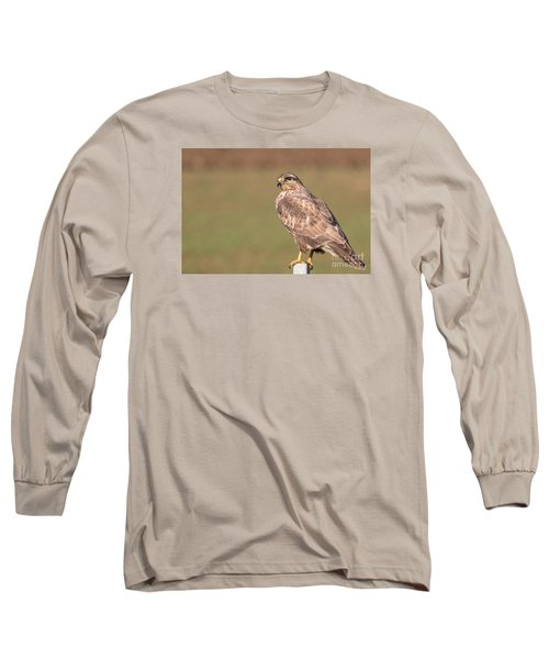 Long Sleeve T-Shirt featuring the photograph Common Buzzard Along The Highway Nis Budapest by Jivko Nakev