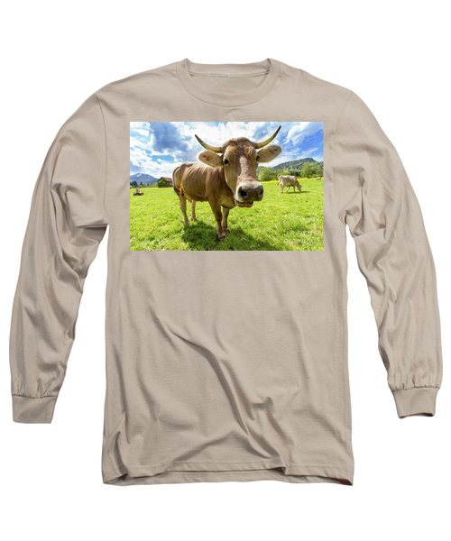 Long Sleeve T-Shirt featuring the photograph Cow In Meadow by MGL Meiklejohn Graphics Licensing