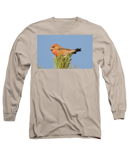 Crossbill Long Sleeve T-Shirt by Judd Nathan