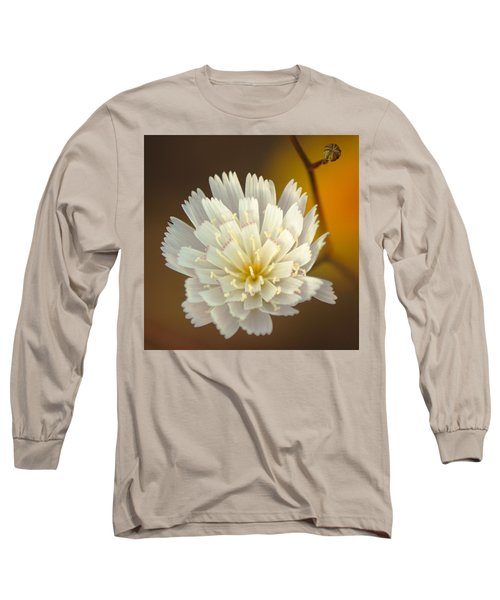 Death Valley Superbloom 203 Long Sleeve T-Shirt by Daniel Woodrum