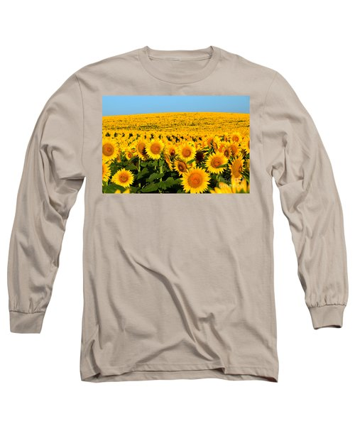 Endless Sunflowers Long Sleeve T-Shirt by Catherine Sherman
