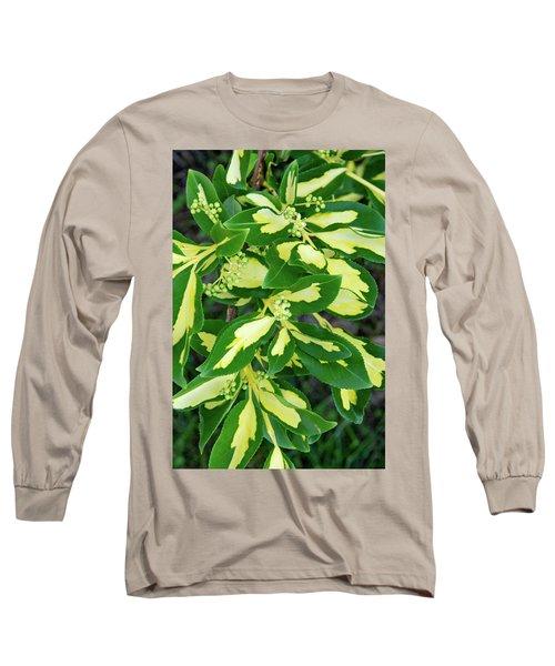 Euonymus Blondy Shrub 2 Long Sleeve T-Shirt