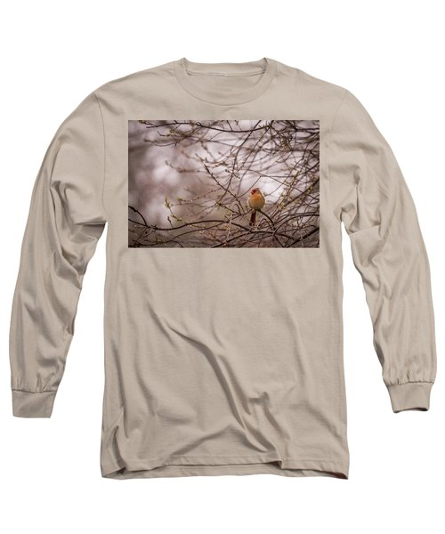 Long Sleeve T-Shirt featuring the photograph Female Cardinal In Spring 2017 by Terry DeLuco