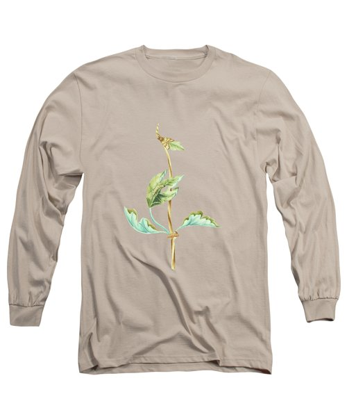 Figtree Branch With Caterpillar And Butterfly By Cornelis Markee1763 Long Sleeve T-Shirt