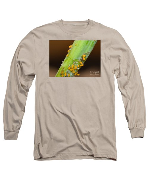 Golden Aphids Long Sleeve T-Shirt by Lew Davis