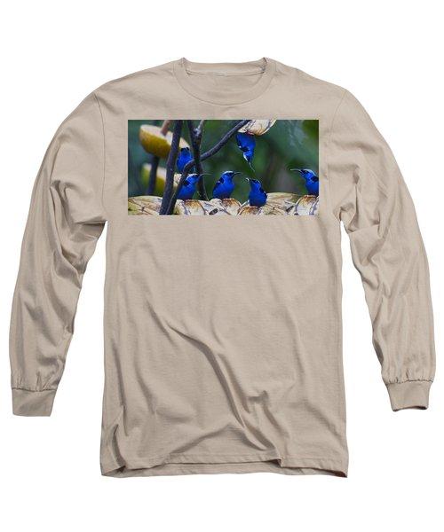 Honeycreeper Long Sleeve T-Shirt by Betsy Knapp