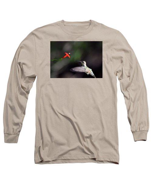 Hummingbird And Cardinal Climber Long Sleeve T-Shirt by Kathy Eickenberg