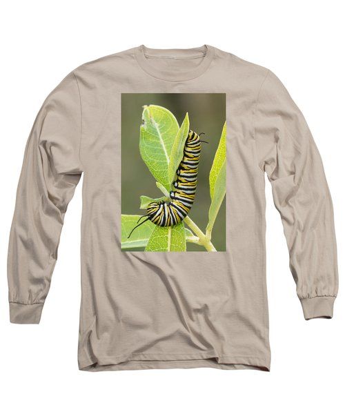 Late Season Monarch Long Sleeve T-Shirt