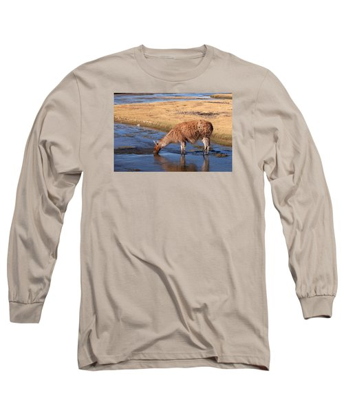 Llama Drinking In River Long Sleeve T-Shirt by Aivar Mikko