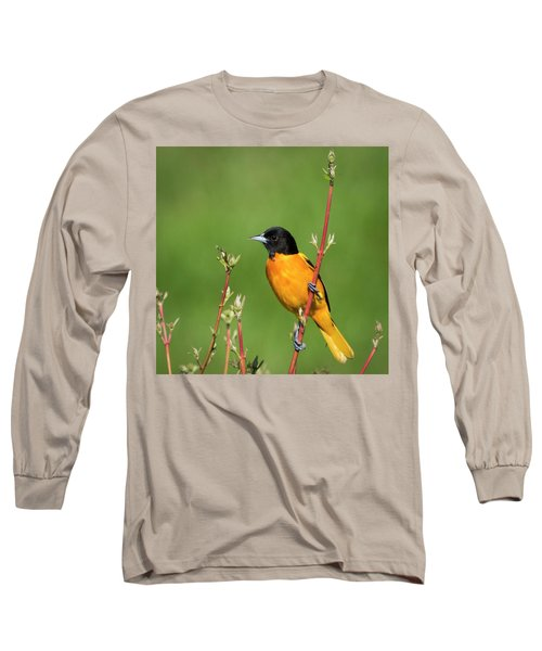 Male Baltimore Oriole Posing Long Sleeve T-Shirt