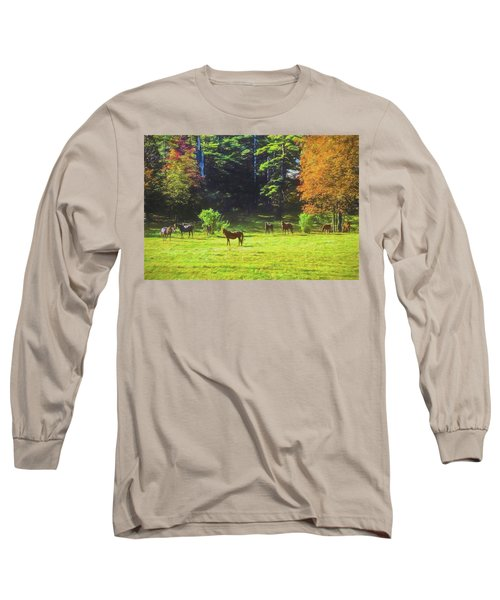 Morgan Horses In Autumn Pasture Long Sleeve T-Shirt