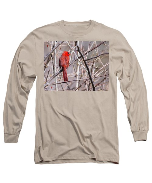 Northern Cardinal In The Sun Long Sleeve T-Shirt by Edward Peterson