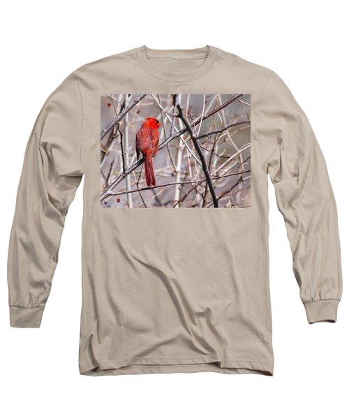 Northern Cardinal In The Sun Long Sleeve T-Shirt