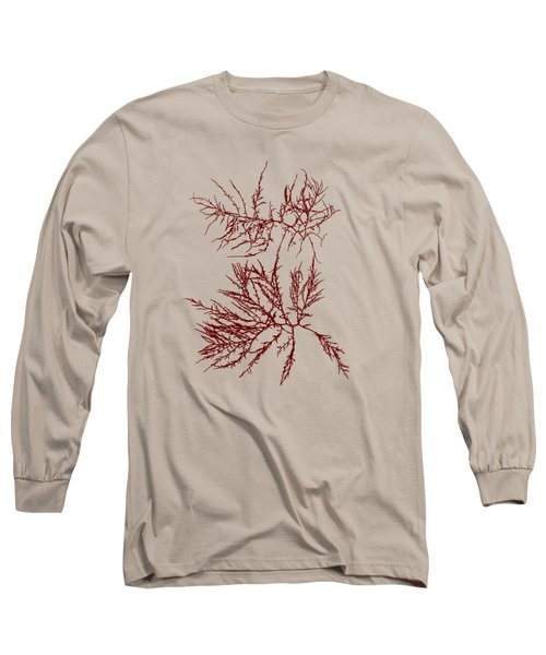 Long Sleeve T-Shirt featuring the mixed media Ocean Seaweed Plant Art Laurencia Tenuissima by Christina Rollo