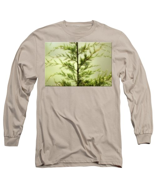 Long Sleeve T-Shirt featuring the photograph Pine Shower by Brian Wallace