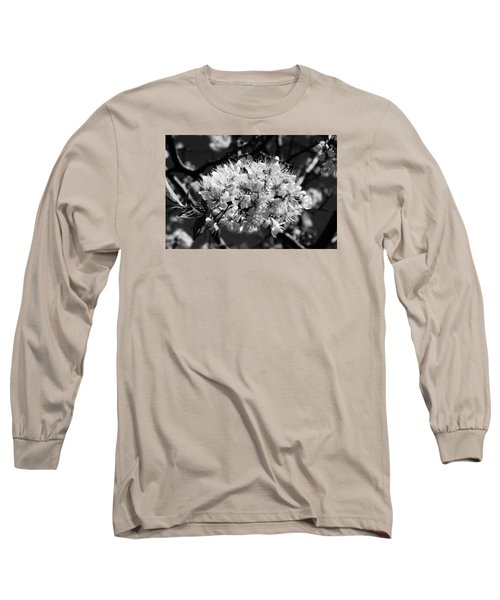 Plum Blossoms Long Sleeve T-Shirt by Steven Clipperton