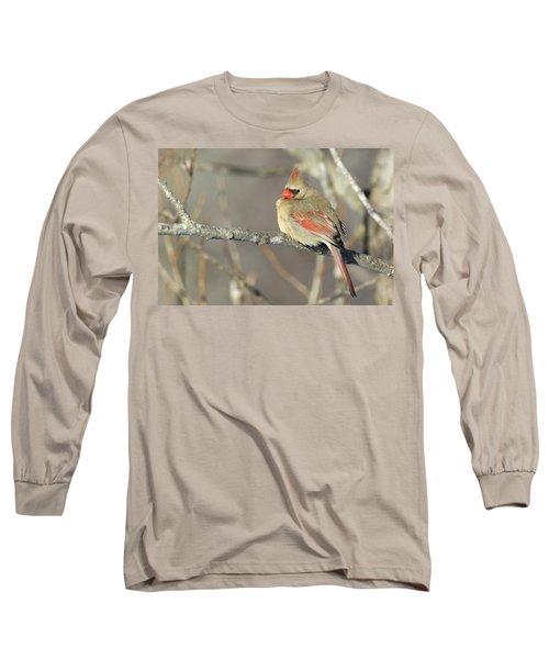 Pretty Female Cardinal Long Sleeve T-Shirt by Brook Burling