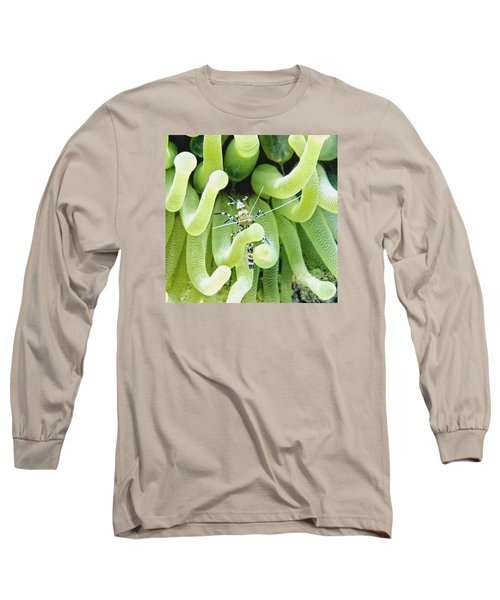 Shrimp And The Anemone Long Sleeve T-Shirt