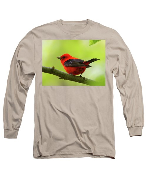 Spring Flame - Scarlet Tanager Long Sleeve T-Shirt