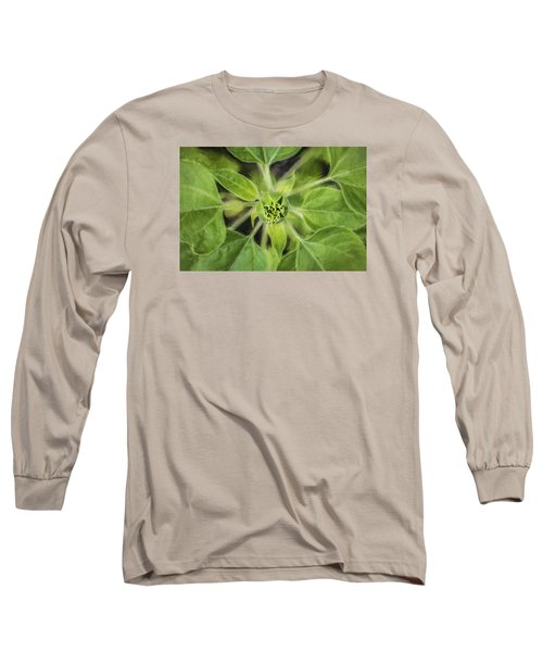 Sunflower Helianthus Giganteus Painted Long Sleeve T-Shirt by Rich Franco