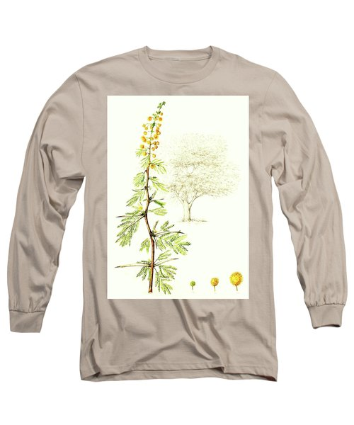 Long Sleeve T-Shirt featuring the painting Sweet Thorn Botanical Illustration by Heidi Kriel