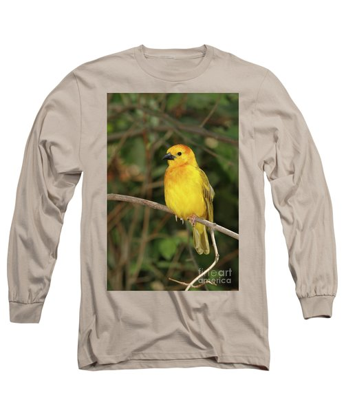 Taveta Golden Weaver #2 Long Sleeve T-Shirt