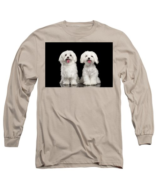 Two Happy White Maltese Dogs Sitting, Looking In Camera Isolated Long Sleeve T-Shirt by Sergey Taran