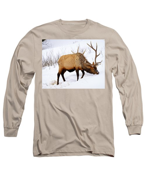 Winter Bull Long Sleeve T-Shirt by Greg Norrell