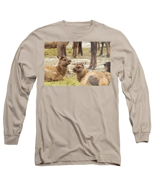 Long Sleeve T-Shirt featuring the photograph Yearlings by Jeff Swan