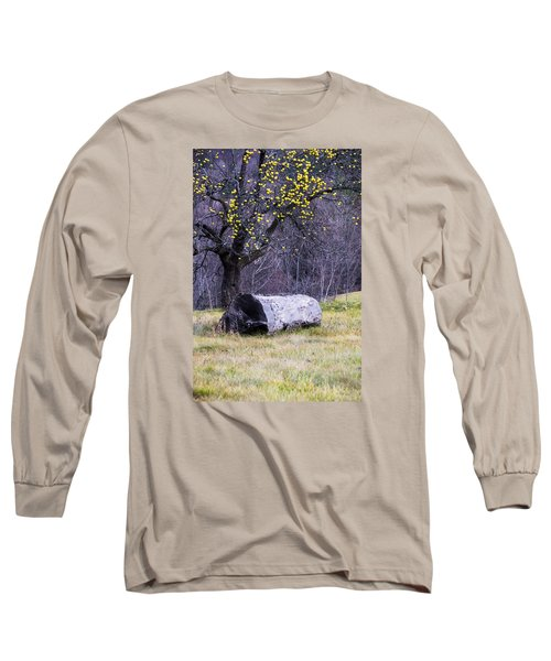Yellow Apples Long Sleeve T-Shirt by Tom Singleton