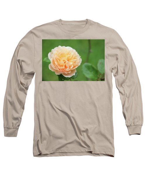 Yellow Rose In December Long Sleeve T-Shirt by Kelly Hazel