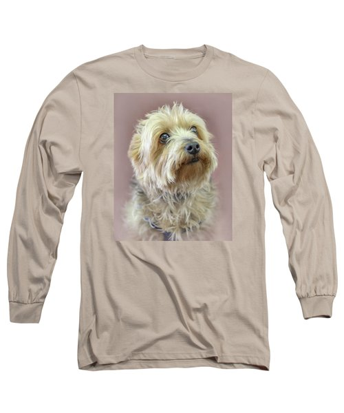 Long Sleeve T-Shirt featuring the photograph Yorkshire Terrier by Marion Johnson