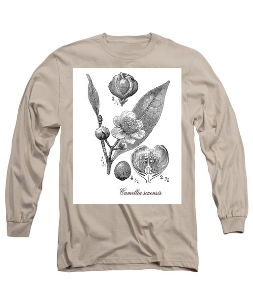 Camellia Sinensis, Botanical Vintage Engraving Long Sleeve T-Shirt