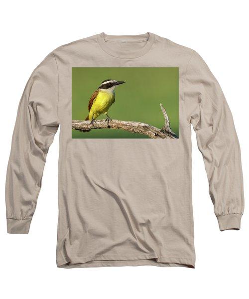 Great Kiskadee Long Sleeve T-Shirt