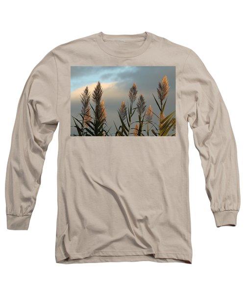 Ornamental Pampas Grass Long Sleeve T-Shirt