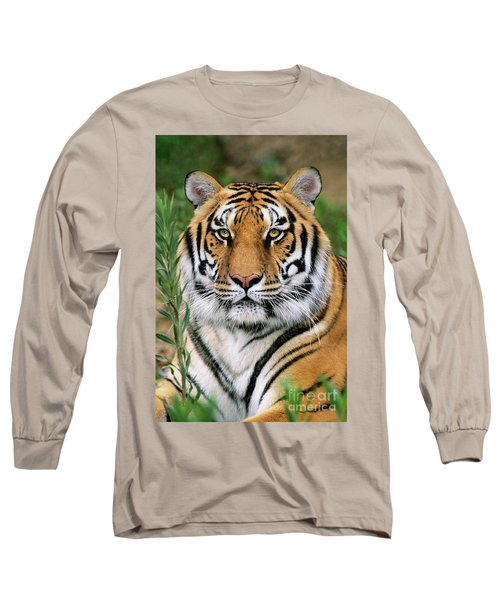 Siberian Tiger Staring Endangered Species Wildlife Rescue Long Sleeve T-Shirt