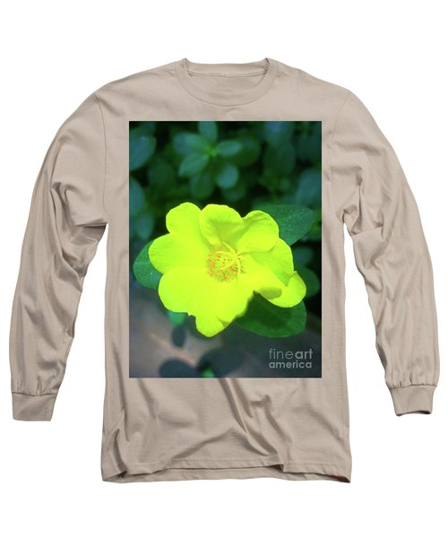 Yellow Hypericum - St Johns Wort Long Sleeve T-Shirt
