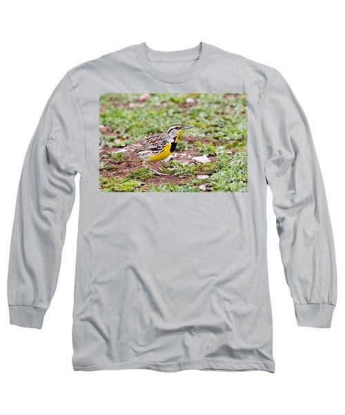 Eastern Meadowlark Sturnella Magna Long Sleeve T-Shirt