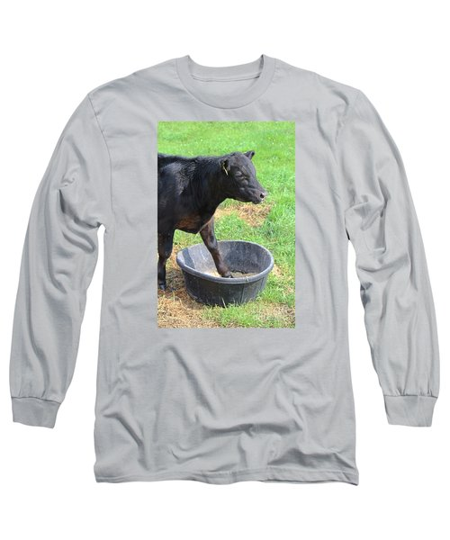 Long Sleeve T-Shirt featuring the photograph Black Angus Calf by Ann E Robson