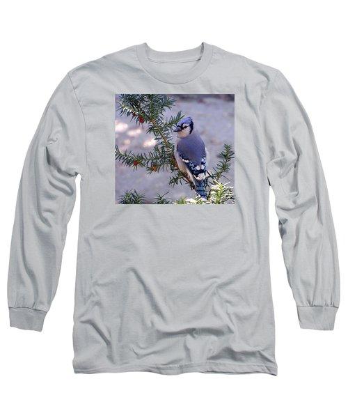 Blue Jay - Morning Visitor  Long Sleeve T-Shirt