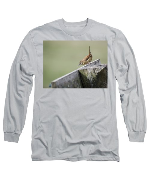 Carolina Wren Two Long Sleeve T-Shirt