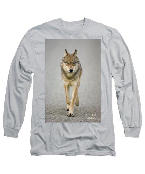 Gray Wolf Denali National Park Alaska Long Sleeve T-Shirt