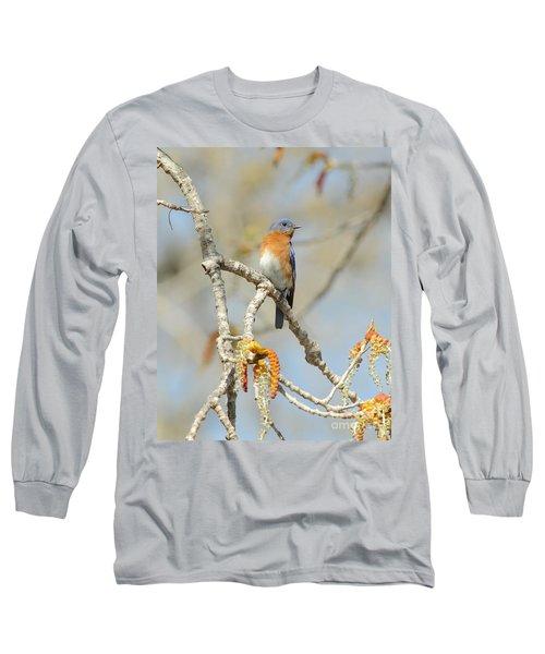 Male Bluebird In Budding Tree Long Sleeve T-Shirt