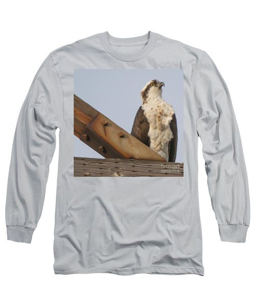 Osprey -seahawk Long Sleeve T-Shirt by Dale Powell