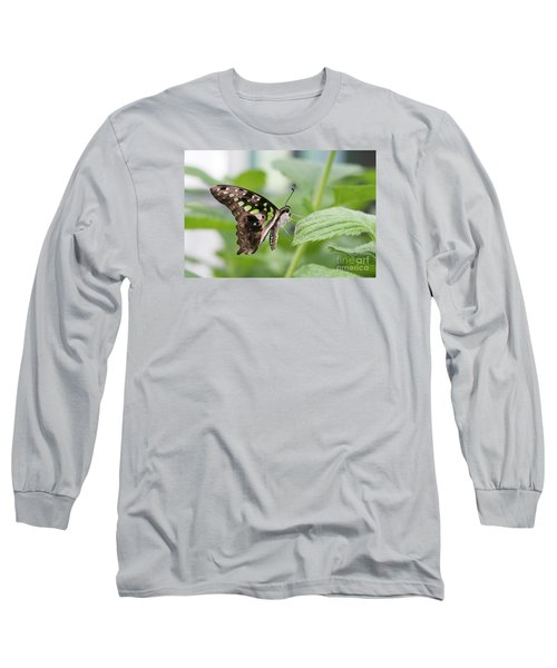 Tailed Jay Butterfly #3 Long Sleeve T-Shirt