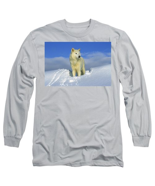 White Wolf In The Snow Idaho Long Sleeve T-Shirt