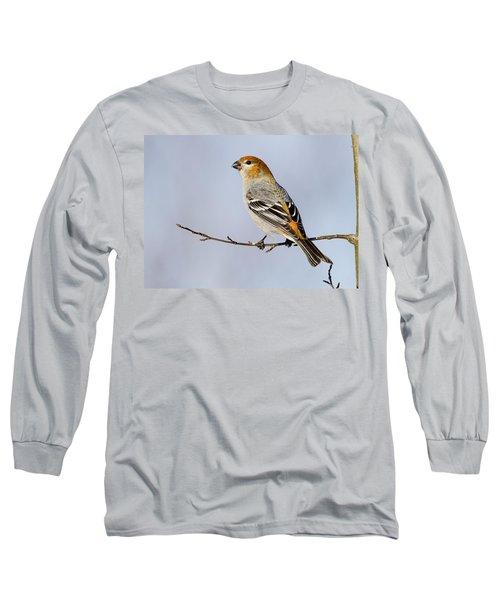 Female Pine Grosbeak Long Sleeve T-Shirt by Doug Lloyd