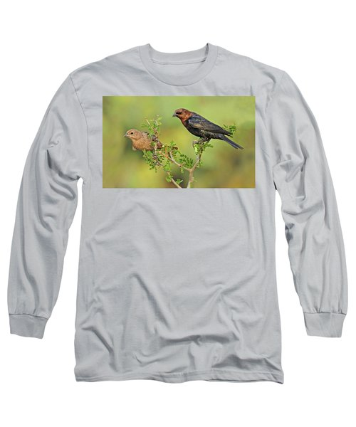 Brown Headed Cowbird Pair Long Sleeve T-Shirt